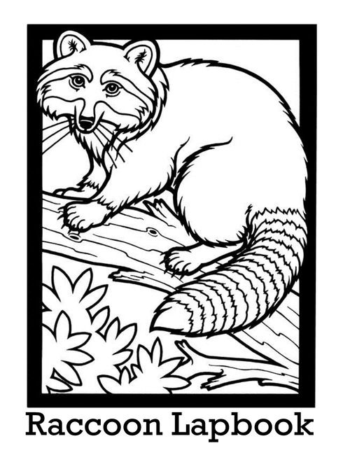 Raccoon Lapbook Coloring Pages For Kids Coloring Pages Animal