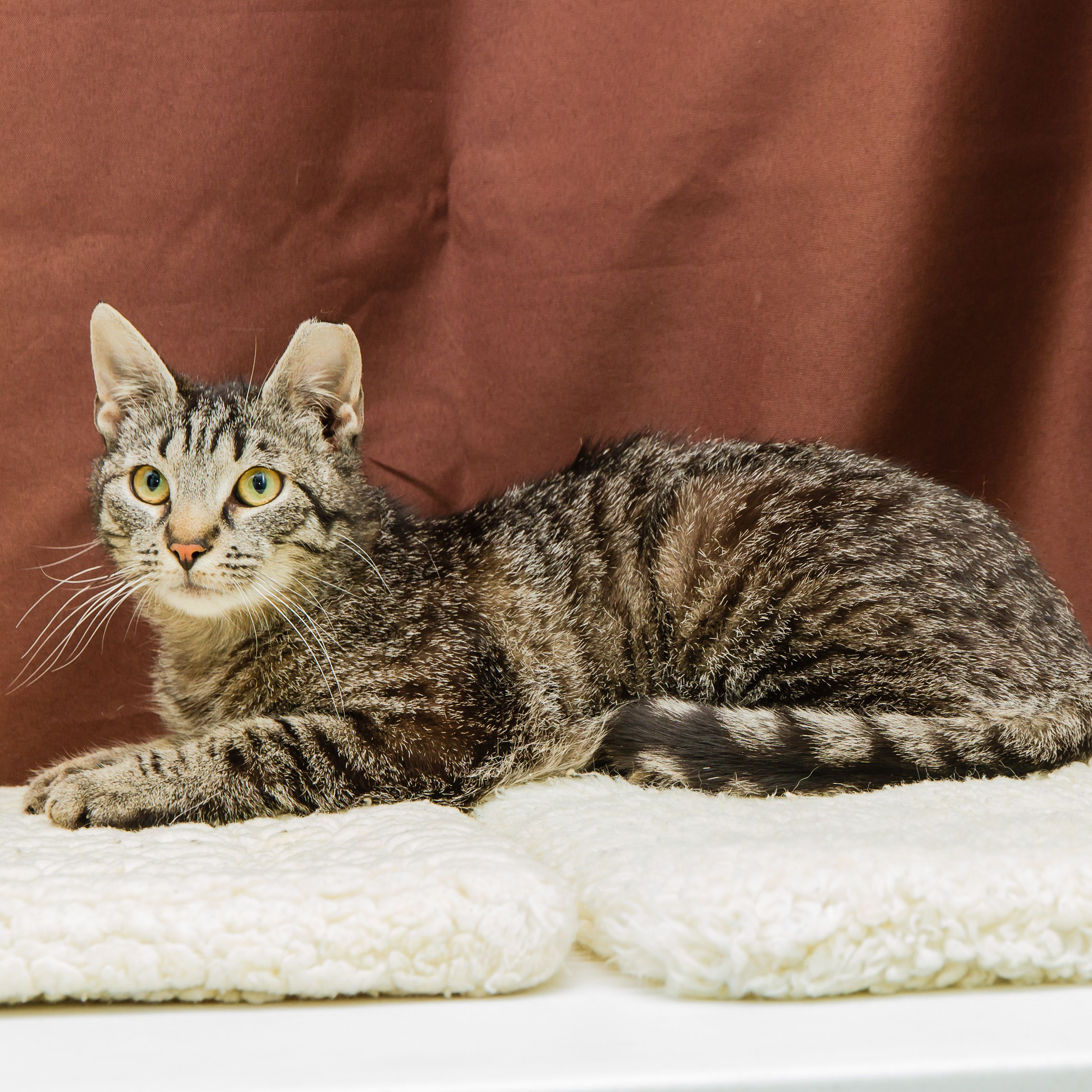 Samuel An 11 Month Old Neutered Male Cat Needs A Foreverhome Can You Help 100kchallenge Cats Animals Humane Society