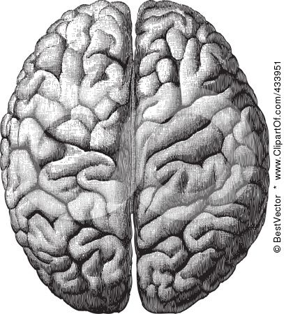 Anatomical Brain Drawing - 4 by BestVector   sPOOKy PaRT 3 ...