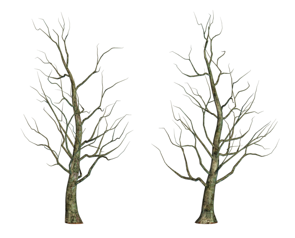 Bare Tree 02 Png Stock Bare Tree Tree Png