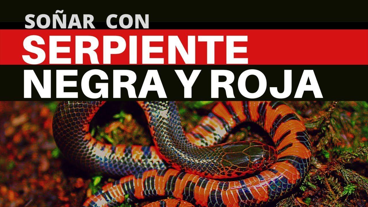 Significado De Soñar Con Serpiente Negra Y Roja Es Posible Que Tengas Miedo Y Frustración Youtube Snake