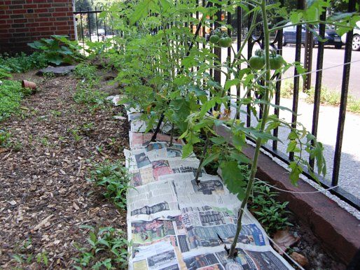 The Urban Gardener: How to Fight Weeds Naturally | All Things ...