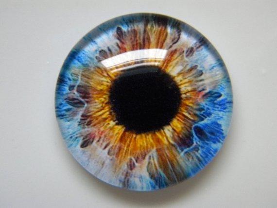 Photo of Glass eyes, blue eyes, golden eyes, colorful eyes, animal eyes, doll eyes, realistic eyes, taxidermy