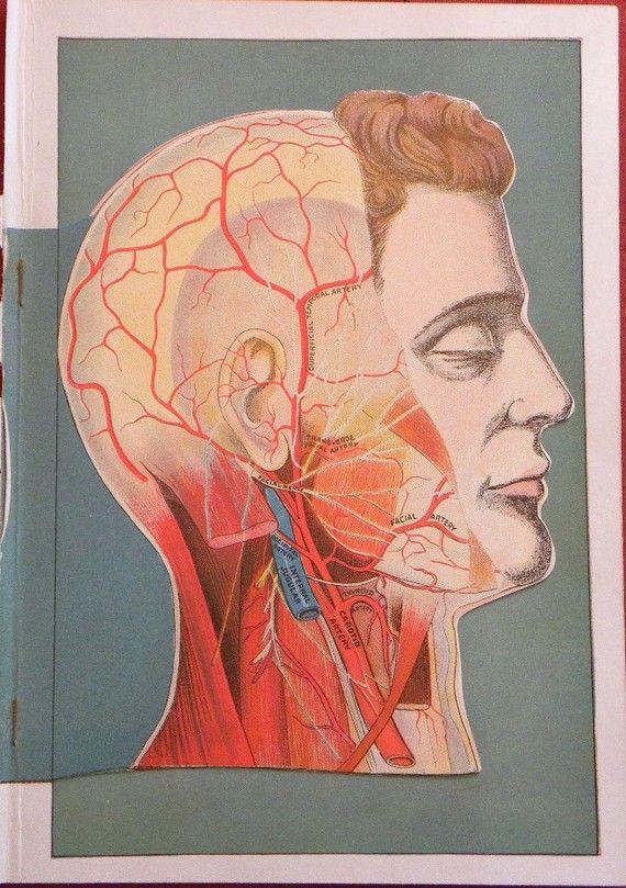 1919 Vintage Medical Full Color Chromolitho Die Cut 3D Fold Out ...