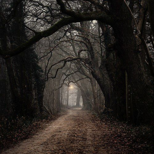 dark forest castle gothic Middle Ages | via Tumblr on We Heart It