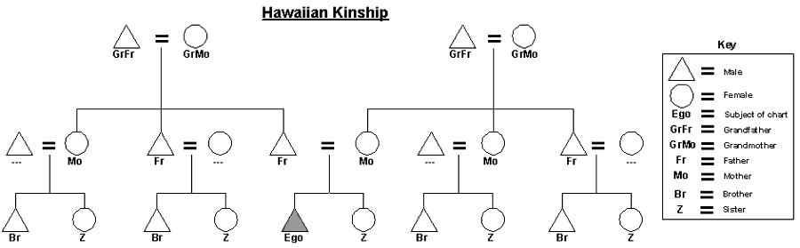 Hawaiian Kinship chart   Anthropology   Pinterest