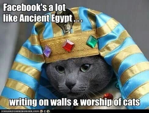 Image result for egypt cat funny