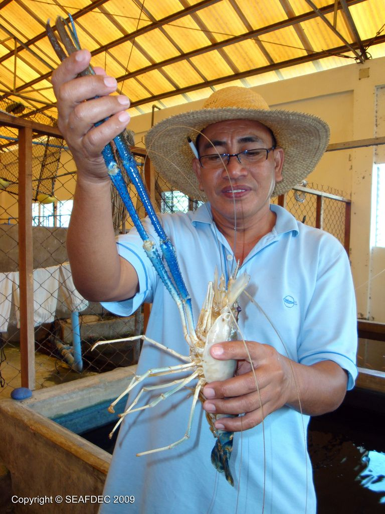 giant freshwater prawn hydroponics gardens and permaculture