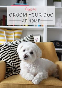 How To Groom Your Dog At Home Wonder Forest Dog Grooming Tips Dog Clippers Dogs