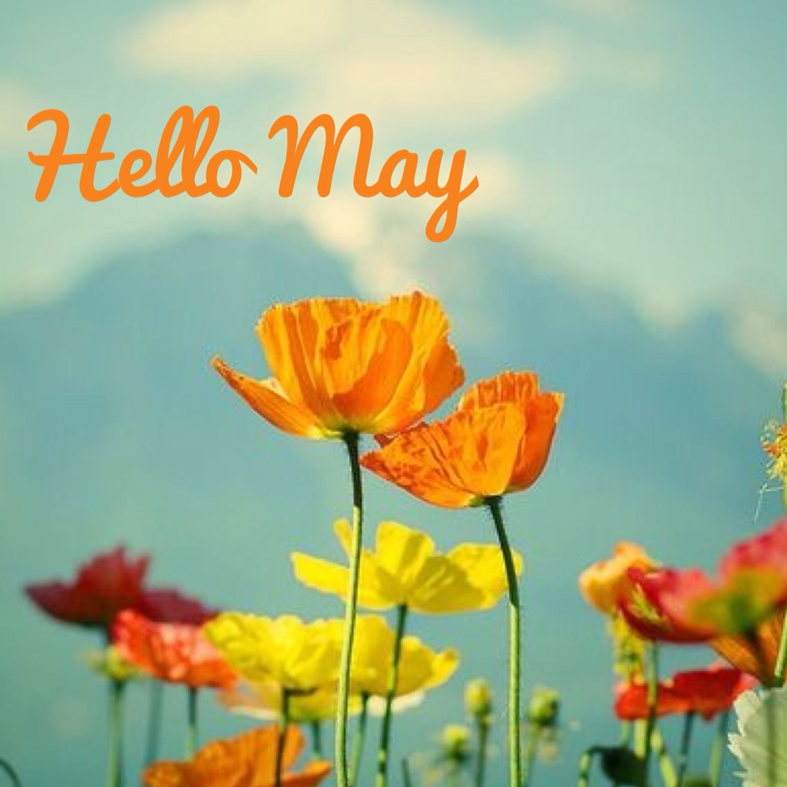 Hello May ! Month of May. May flowers. Quote of the month
