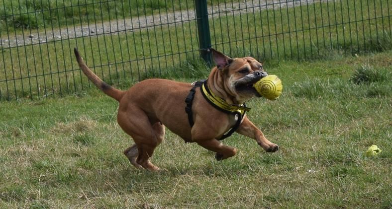 Shyla Is Struggling To Find Her Best Side But We Think They Re All Beautiful Dogs Trust Rehoming Dogs