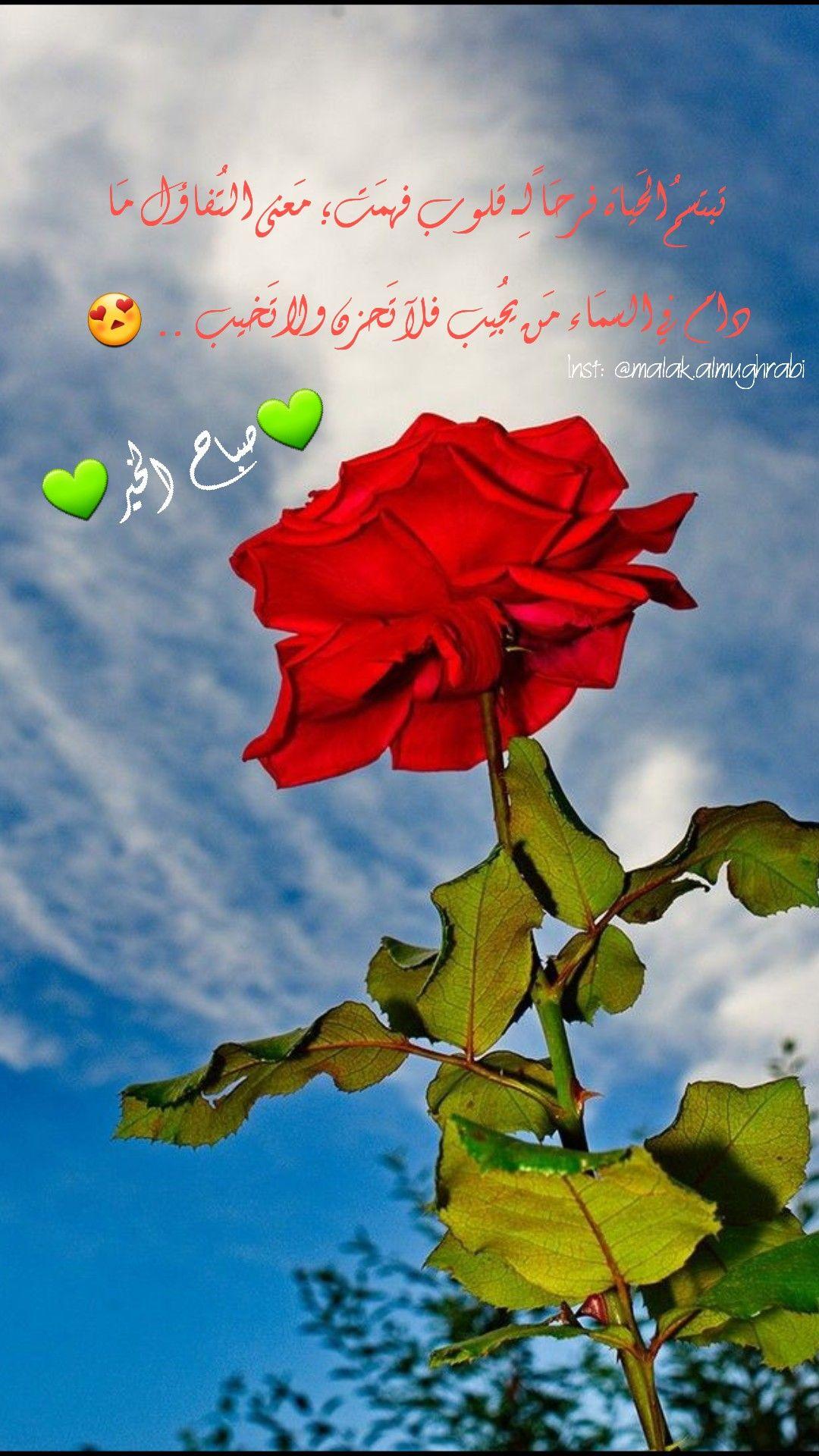 اجمل صور قلوب من ورود وزهور صور و خلفيات الوليد Flower Heart Bleeding Heart Flowers