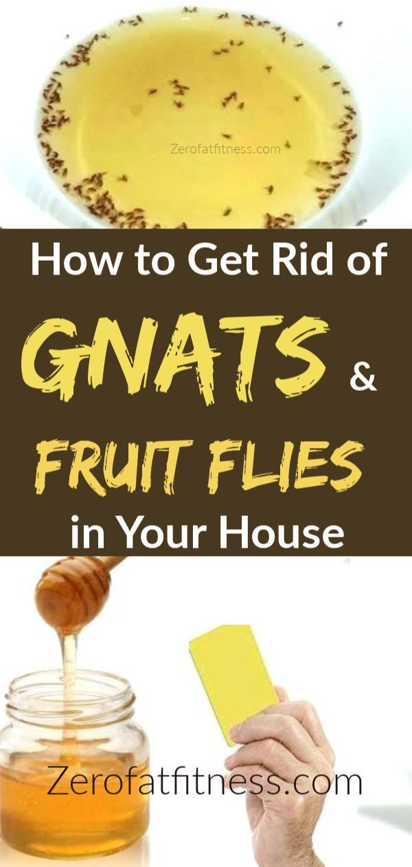 How To Get Rid Of Gnats And Fruit Flies Fast In Your House And Keep Your House Bug Free Of Fungus Gnat Fruit Flies How To Get Rid Of Gnats Fruit