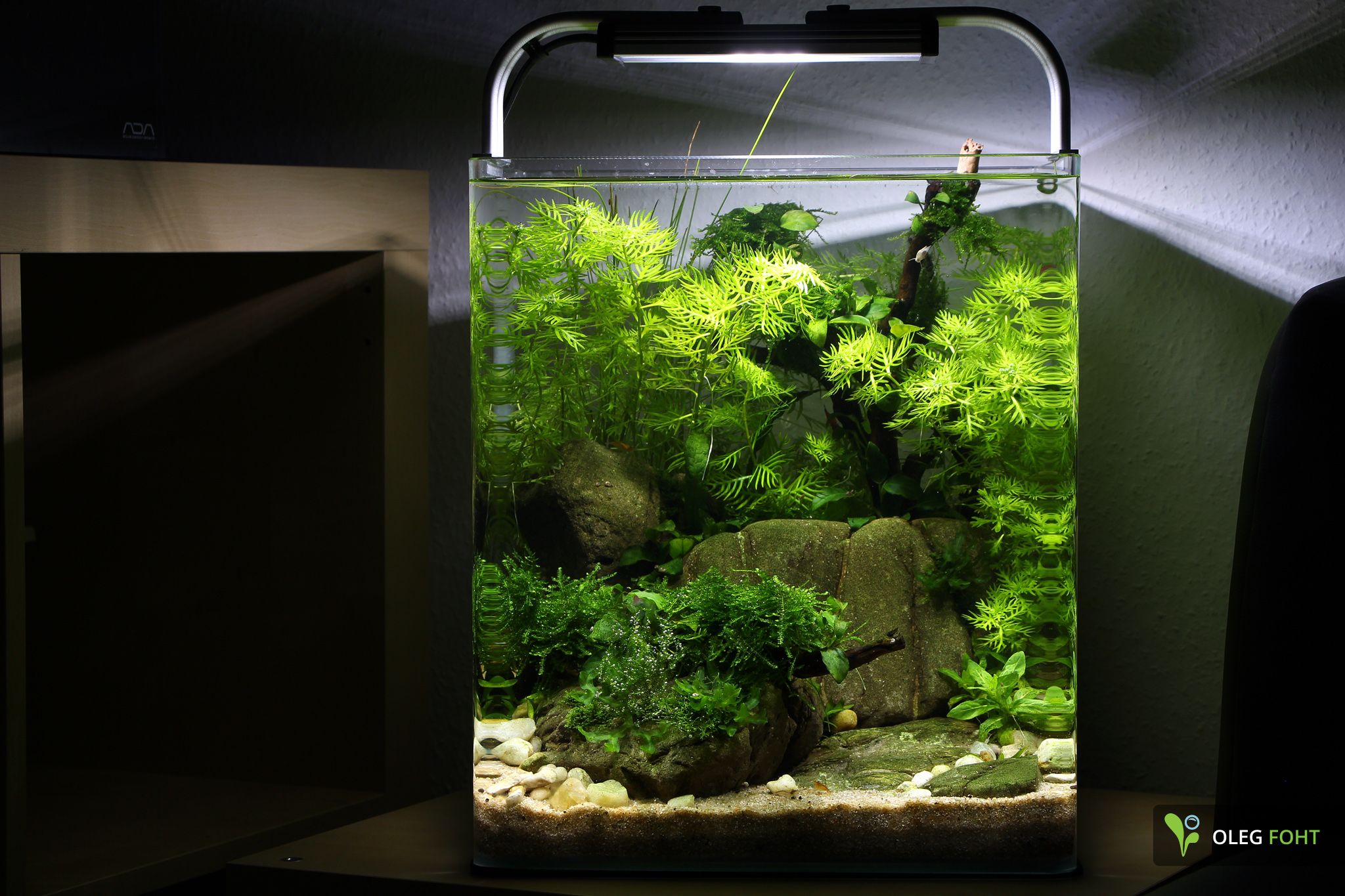 30 l nano after 6 weeks aquascaping aquarium aquarium einrichten und nano aquarium. Black Bedroom Furniture Sets. Home Design Ideas