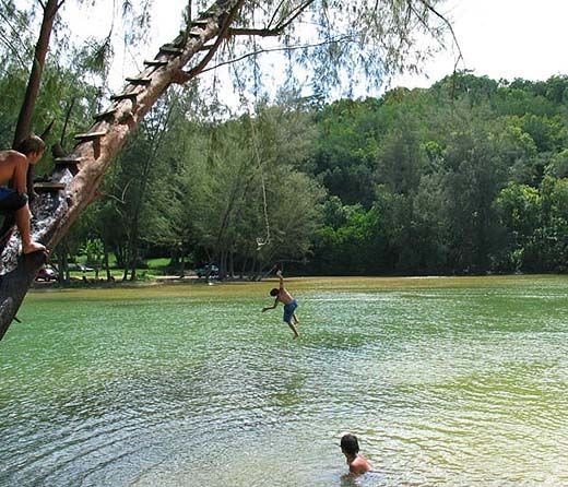 Rope Swing In A Pond - Google Search