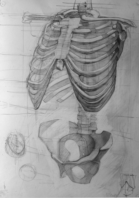 Pin by Pavel Morugov on Рефы   Pinterest   Anatomy, Draw and Anatomy ...