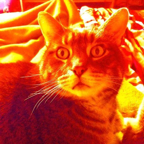 Color Wheel Feat Oats Piggy Meeko Fairy Cats Animals