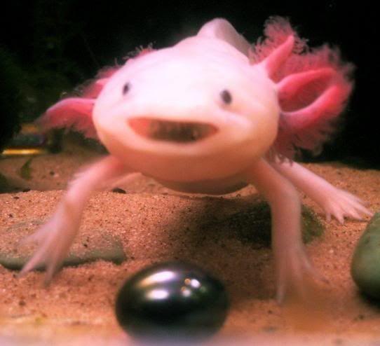 Axolotl Smile