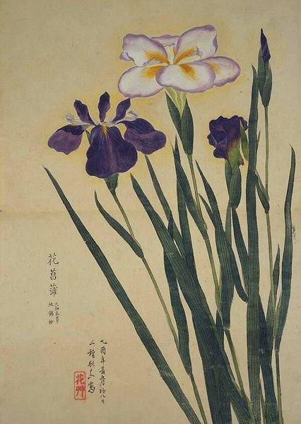 梅园百花画谱(二)——夏の部