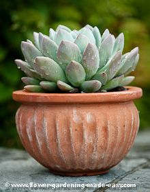 Examples Of Succulents In Containers Stylish And Easy Potscaping