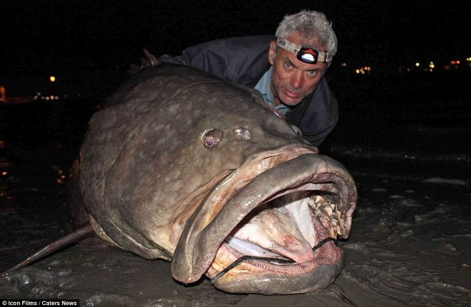 Giant River Fish