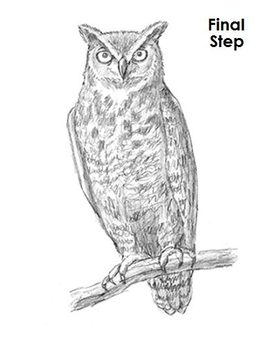 Great Horned Owl Drawing Final   Owls fdbb05a68c96