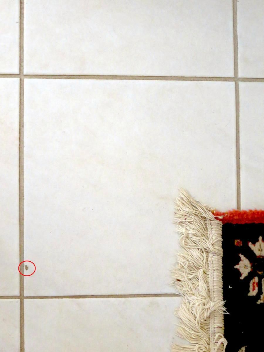 How To Repair A Chipped Tile With Epoxy And Paint Tile Layouts Ceramic Floor Tiles Ceramic Tile Floor Bathroom Tiles