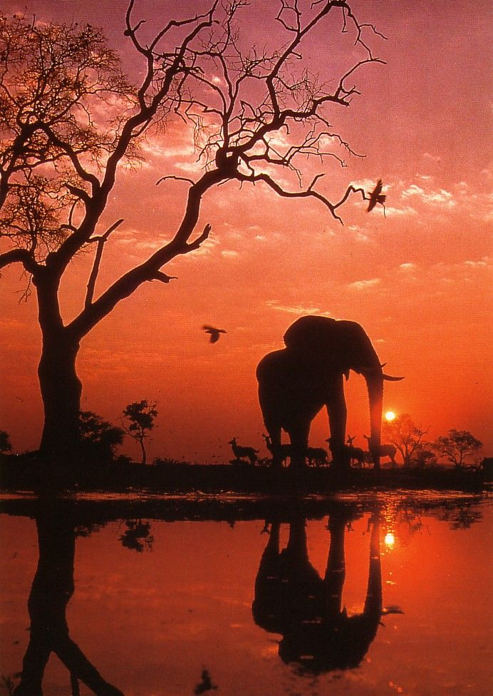 Sunset with elephant by the water