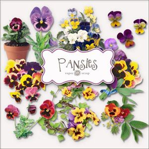Precious Pansy Faces Pansies Flower Quotes Forever Flowers