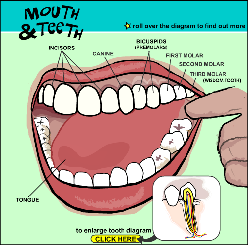 mouth and teeth interactive tools help parents and. Black Bedroom Furniture Sets. Home Design Ideas