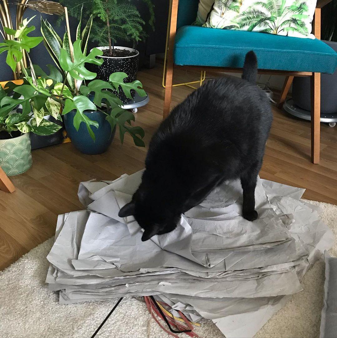 Paaaaper Piiiile Paperpile Papercat Nevertoooldforagoodpapergame Plants Cat Blackcat Playingcat Catsofinstagram Cats Cats Of Instagram Black Cat