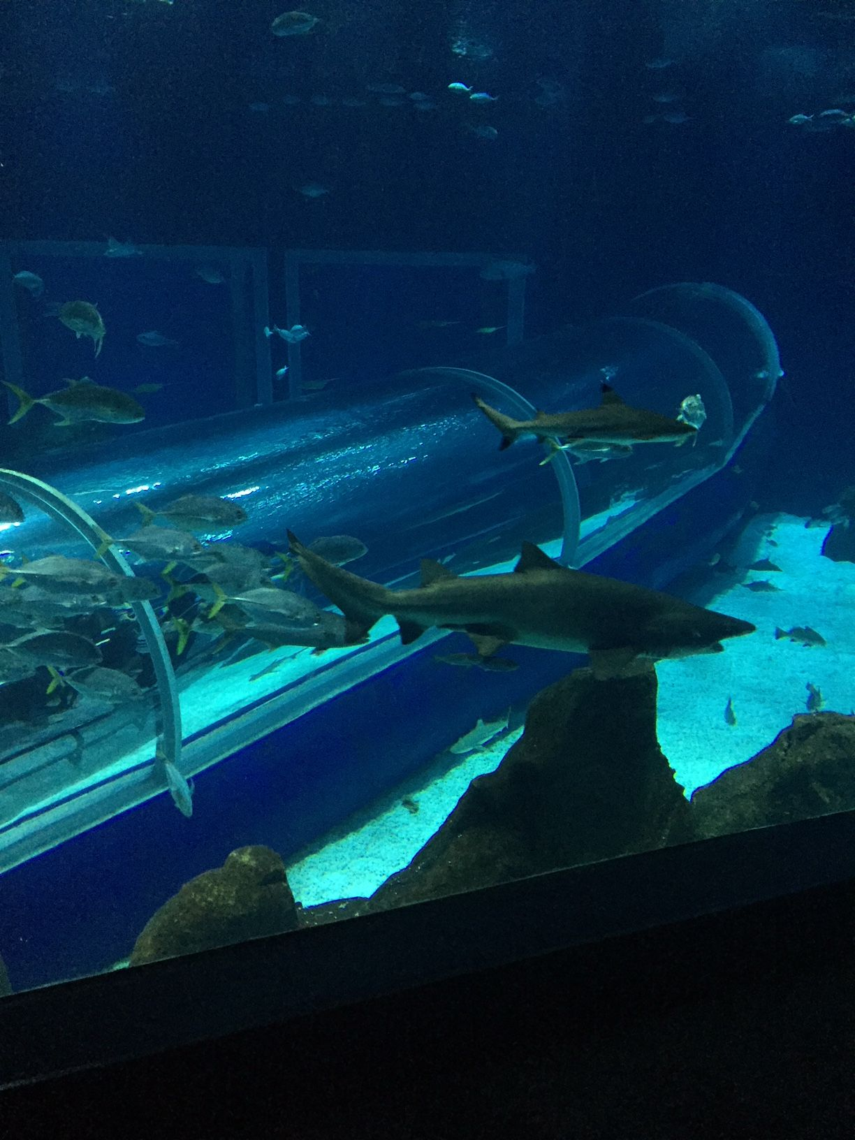 The largest aquarium in South America, Rio de Janeiro ...