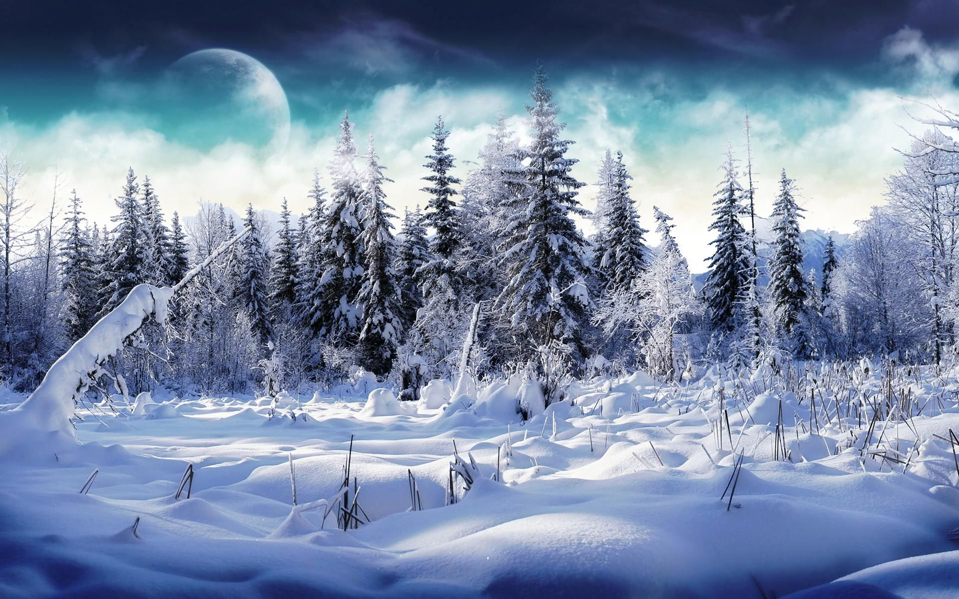 Desktop Wallpaper · Gallery · Nature · Winter Snowy forest | Free Background 1920x1200