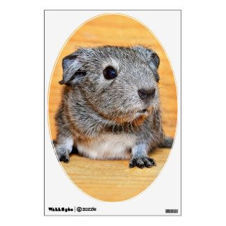 Cute Guinea Pig Rodent Pet Animal Furry Wall Graphic