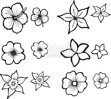 Illustrations Of Six Tropical Flowers Also Available In Full Color