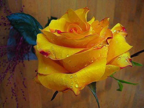 1Rosa amarela (108 pieces)