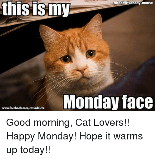 Good Morning To All My Friends Happy Monday Cats Catsofinstagram Catstagram Cats Of World Cats Of Day Cats Good Morning Cat Morning Cat Cat Memes