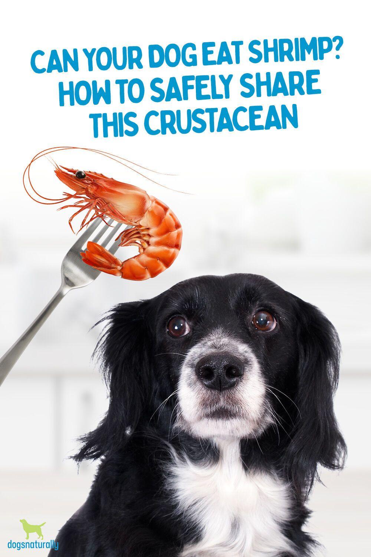 Shrimp can be a tasty treat for your dog. Yep, you heard
