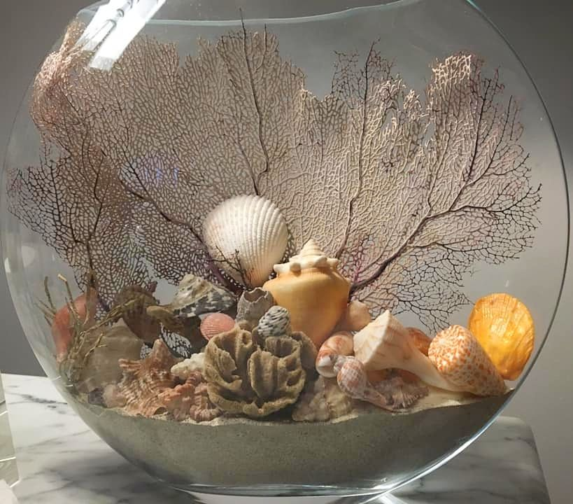 Pin On Seashell Decor Shell Crafts