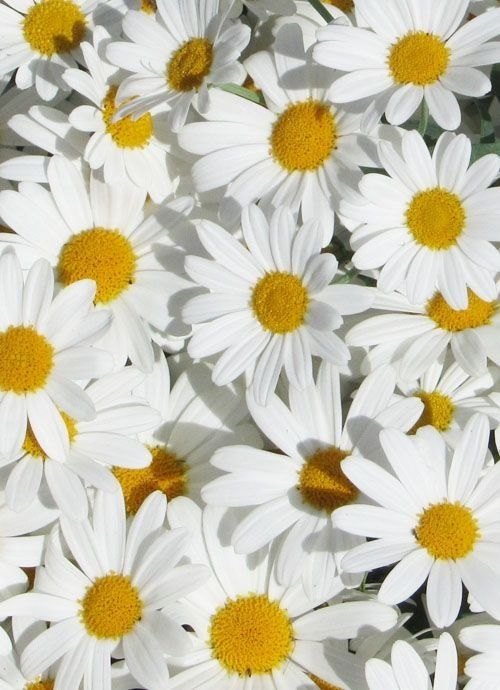 Oops the daisies