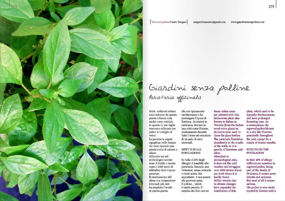 Blossomzine Pag 78 79 Pollen Free Parietaria Off Franco Zangari