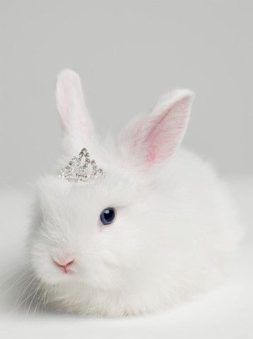 bunny wearing tiara