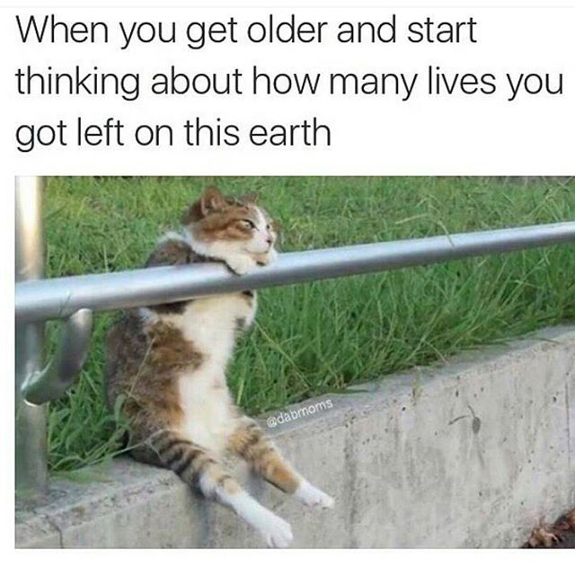 In 8 Days Time I M Turning 30 I M Like Wtaf Thought I D Have Everything By Now Oh Well Cat Memes Cute Cats And Dogs Funny Cat Memes