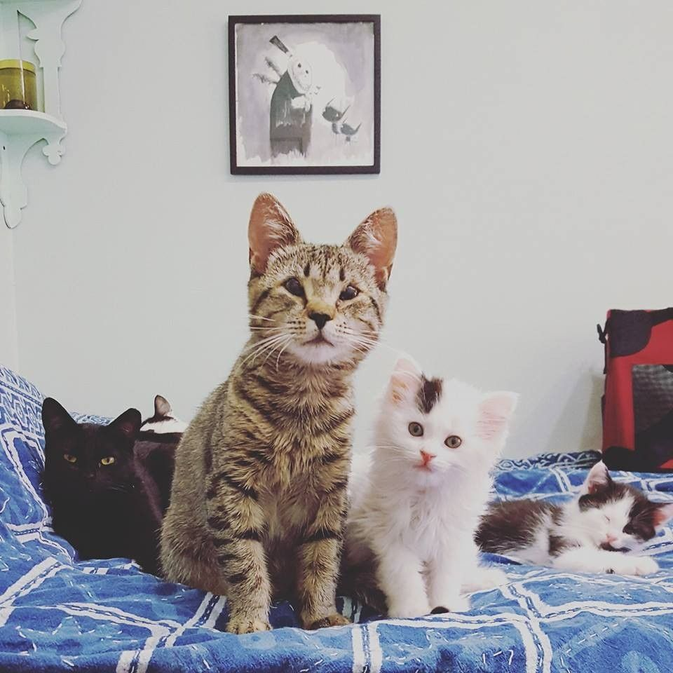 Woman Captures Time Lapse Of Her Foster Kitten From Birth To Adoption Foster Kittens Kittens Foster Baby