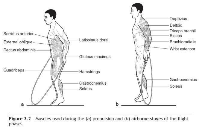 Image Of Muscles Worked By Jump Rope Google Search
