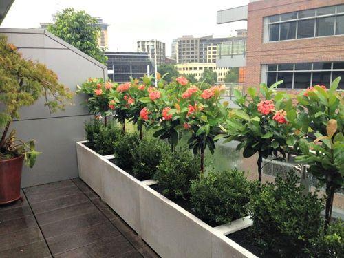Plantas para terrazas patios terrazas y balcones de for Arboles para balcones y terrazas