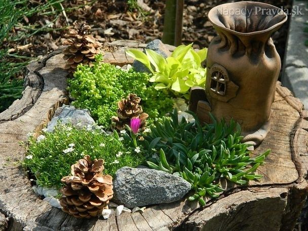 Mini záhrada v starom orechovom pni