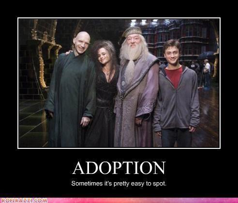 Harry Potter Vs Twilight Photo Adoption Harry Potter Jokes Harry Potter Universal Harry Potter