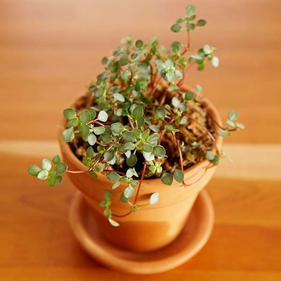Top Plants For Terrariums Terrarium Inspirations Best Terrarium