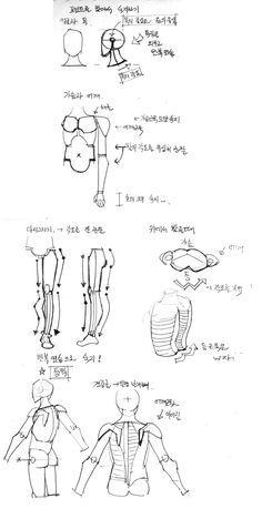 인체 비례 및 근육 간단 강좌... 철의날개님,딩고와 켄님 요청.. | Daum 루리웹